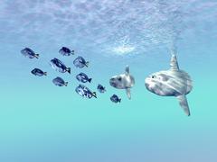 Two large sunfish escort a school of Blue Tango fish. Stock Illustration