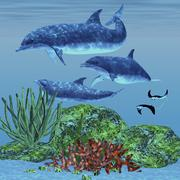 Three dolphins swim around a reef area looking for fish to eat. - stock illustration