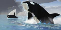 Whales burst from the ocean in a great splash of water. - stock illustration