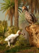 A pair of Dodo birds play a game of hide-and-seek. Stock Illustration