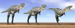 Three Aucasaurus dinosaurs standing in the desert by daylight. Stock Illustration