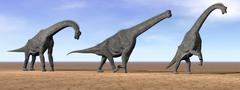 Three Brachiosaurus dinosaurs standing in the desert. Stock Illustration