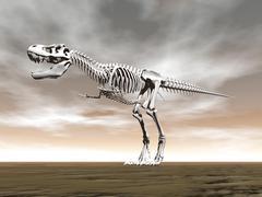 Tyrannosaurus rex skeleton. - stock illustration