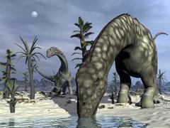 Argentinosaurus dinosaurs grazing in the desert. Stock Illustration