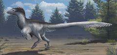 A mid-sized Cretaceous China deinonychosaur. Stock Illustration