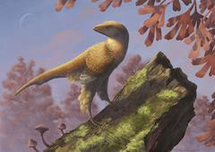Eosinopteryx brevipenna perched on a tree branch. - stock illustration