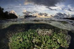 Reef-building corals thrive on a reef in the Solomon Islands. Stock Photos