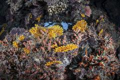 A colorful coral reef grows along a deep dropoff in the Solomon Islands. Stock Photos