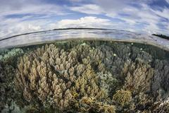Soft corals thrive on a healthy reef in the Solomon Islands. Stock Photos