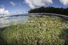A healthy coral reef grows in the Solomon Islands. Stock Photos