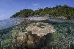 A diverse array of reef-building corals in Raja Ampat, Indonesia. - stock photo