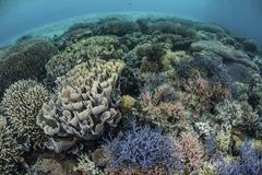 Colorful corals near the island of Alor, Indonesia. Stock Photos