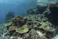 A healthy coral reef thrives in Komodo National Park, Indonesia. Stock Photos