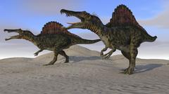 Two Spinosaurus dinosaurs hunting on desert terrain. Stock Illustration
