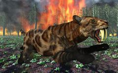 A Saber-Toothed Tiger running away from a forest fire. Stock Illustration