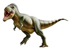 Tyrannosaurus Rex, a genus of coelurosaurian theropod dinosaur. Piirros