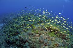 Colourful reef scene, Christmas Island, Australia. Stock Photos