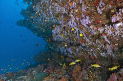 Colourful reef scene, Ari and Male Atoll, Maldives. - stock photo