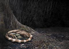 A Mei long curls up beside the roots of a tree to shelter from the rain Stock Illustration