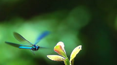 Blue dragonfly beautiful insect Stock Footage