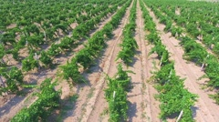 Aerial flight over beautiful champaigne vineyard rows in the mountains Stock Footage