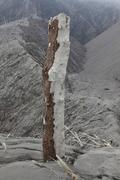 Remains of tree with bark stripped off by pyroclastic flows of Chaiten volcano, Stock Photos