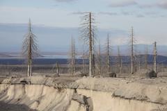Dead trees beside erosion gulley revealing pyroclastic flow deposits. - stock photo