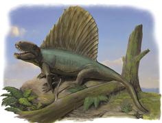 Dimetrodon limbatus, a prehistoric animal. Stock Illustration
