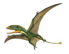 Dimorphodon macronyx, a prehistoric era pterosaur. Stock Illustration