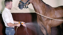 Young man cleans the horse Stock Footage