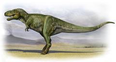 Tarbosaurus bataar, a prehistoric era dinosaur. Piirros