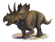 Agujaceratops mariscalensis, a prehistoric era dinosaur. Stock Illustration