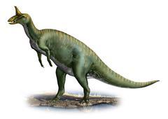 Tsintaosaurus spinorhinus, a prehistoric era dinosaur. Stock Illustration