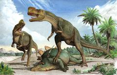 Confrontation between two Kileskus aristotocus dinosaurs over a dead Stock Illustration