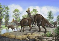 Amurosaurus riabinini dinosaurs grazing in prehistoric wetlands. Stock Illustration