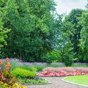Blossoming flowerbeds in the park Stock Photos