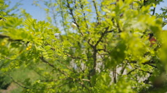 Yellow green bush of a young tree on a bright sunny day in park closeup Stock Footage