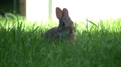 Baby Rabbit Eating Stock Footage