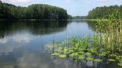 Summer day at remote forest lake Stock Footage