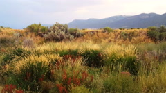 Multi colored grasses wave in breeze mountains background Stock Footage