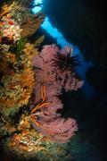 Sea fans and crinoid, Fiji. - stock photo