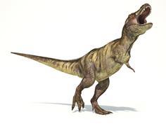 Tyrannosaurus Rex dinosaur on white background. Piirros