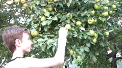 Boy Picking Apple from Tree Stock Footage