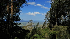 Australia Dividing Range view from gum forest Stock Footage