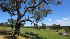 Australia Mumbulla tree and view Stock Footage
