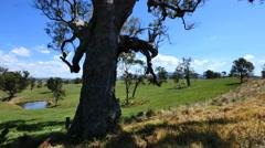 Australia Mumbulla tree and stock pond Stock Footage