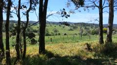 Australia Mumbulla trees and barn Stock Footage