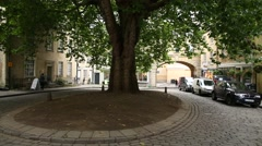Oak tree in the centre of the City of Bath - pan Stock Footage