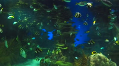 Saltwater fish schooling Stock Footage