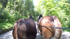 Time lapse Carriage ride pulled by horses to Neuschwanstein castle Stock Footage